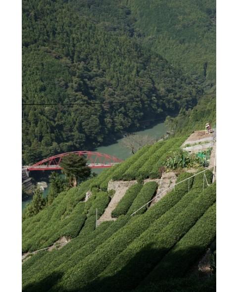 Tchaï Indien Thé Vert Bio aux épices (Masala)